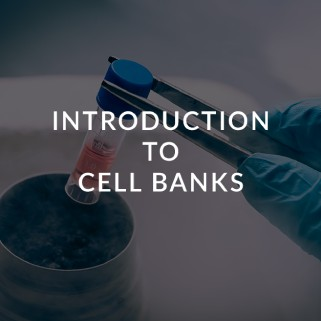 cell-banks-ceutiqus-biopharmaceutiqals-academy-masterclass-bam-atmp-experts