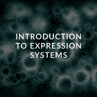 expression systems ceutiqus biopharmaceutiqals academy-masterclass-bam-atmp-experts
